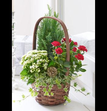 Planted Rustic Basket