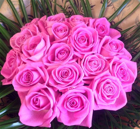 Massed Pink Roses